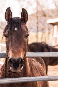 Equines need bi-annual wellness exams.