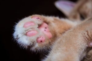 Use olive oil or petroleum jelly on kitty paws