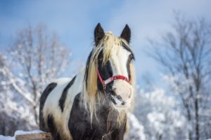 Protect Your Horse During Winter