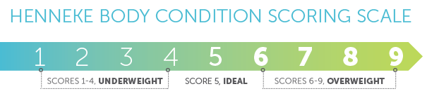 Use the Henneke Body Condition Scoring for your Horse