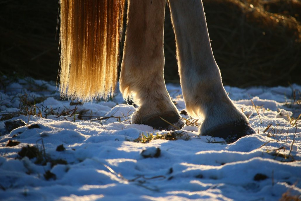 Hoof care is still critical during winter months