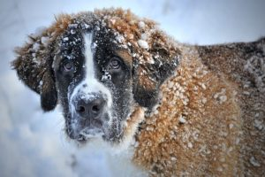 Protect Your Dog During Winter