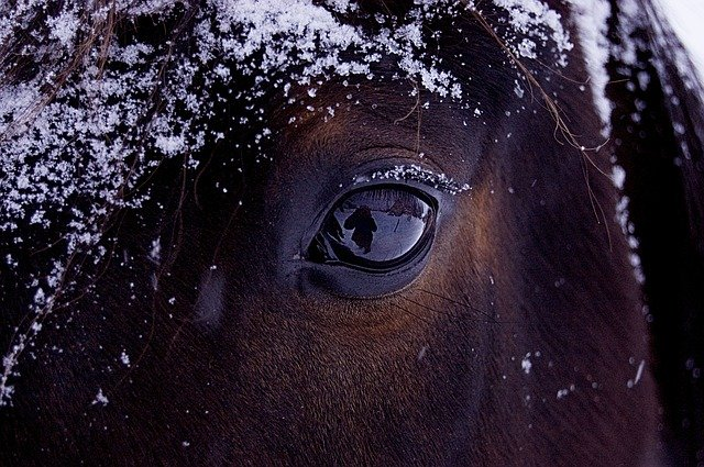 Horses need shelter and dry blankets during winter