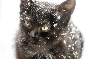 Never leave your feline out all winter
