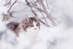 Keep Your Feline Safe in Winter