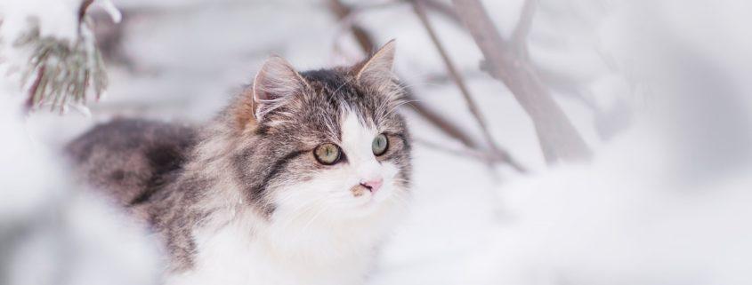 Keep Your Feline Safe in Winter