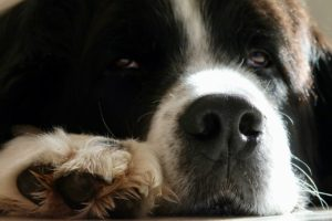 Protect Dogs Paws and Noses this Winter