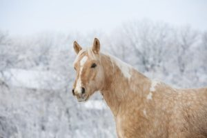 Horses need more water during winter