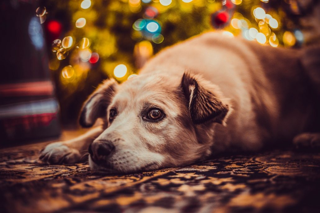 Dogs are For Life, Not Just Holidays