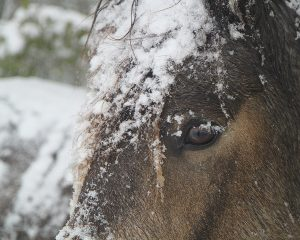 Use Natural Herbs for Your Horse's Dry Winter Skin
