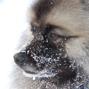 Proper Grooming Addresses Winter Dry Skin in Dogs