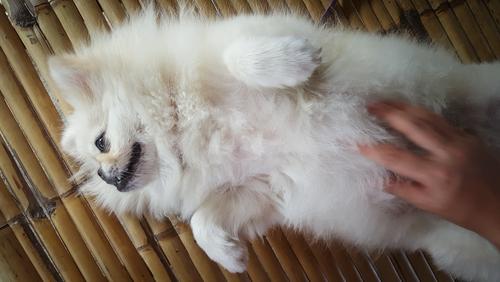 Dog Massage Helps Winter Dry Skin