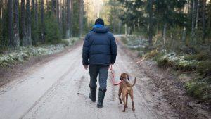 Dogs Still Need Walks in Winter