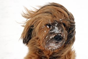Winter Grooming Tips after a Walk with your dog
