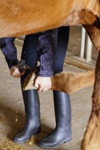 Protect and Strengthen Horse's Hooves Year round