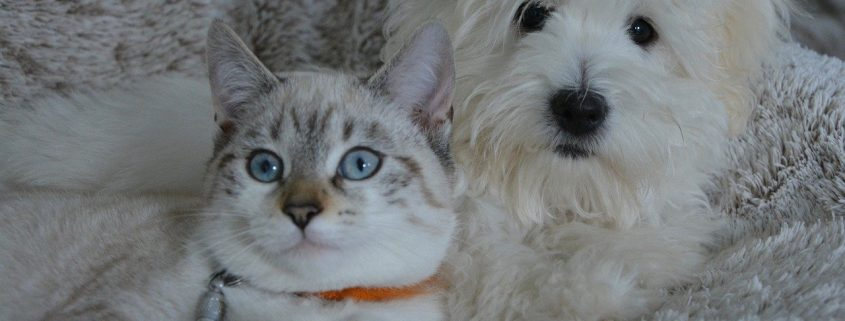 Dry Winter Air Causes Dry Winter Skin for Pets