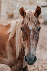 Senior Horses May Shed Later