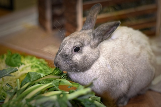 Rabbit Eating Fresh Greens