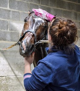 Woman Washing Horse's Head