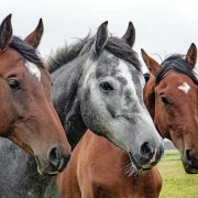 3 Horses in a Pasture