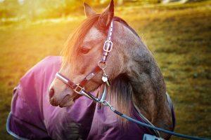 Horse Outside Wearing a Blanket