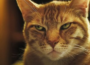 Cat Smiling with Narrowed Eyes