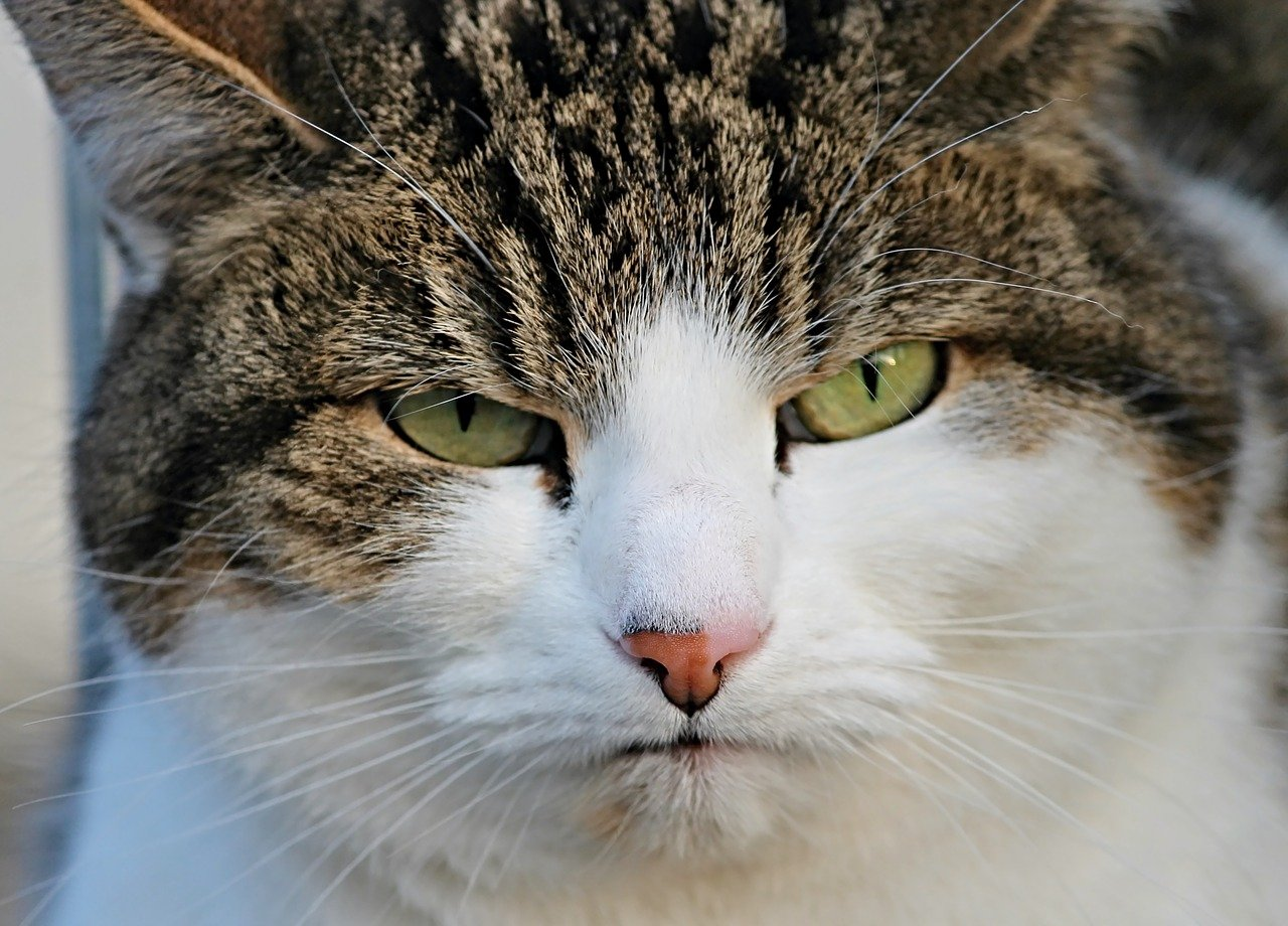 Cat with Narrowed Eyes
