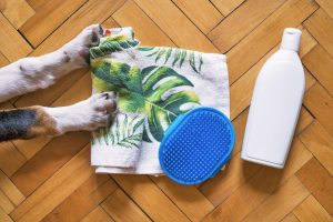 Shampoo, Towel and Dog on Floor