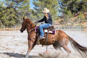 Rodeo Horse Doing Barrels