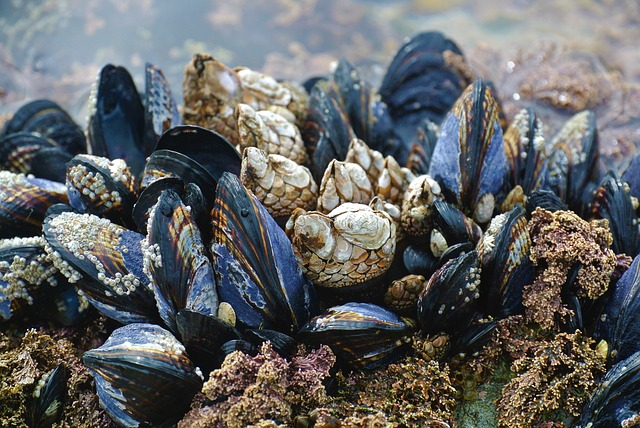 Extreme heat affects marine life