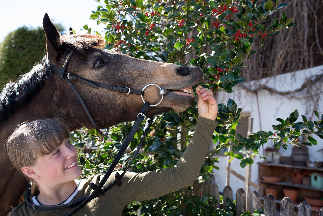 Woman Feeding a Horse a Small Treat